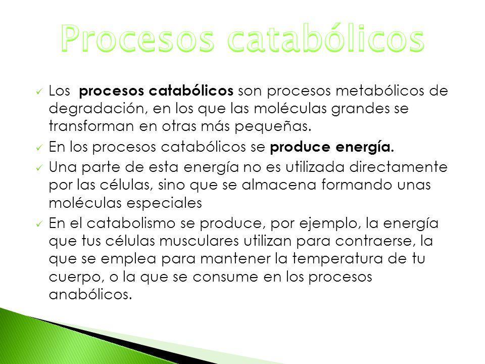 Procesos catabólicos
