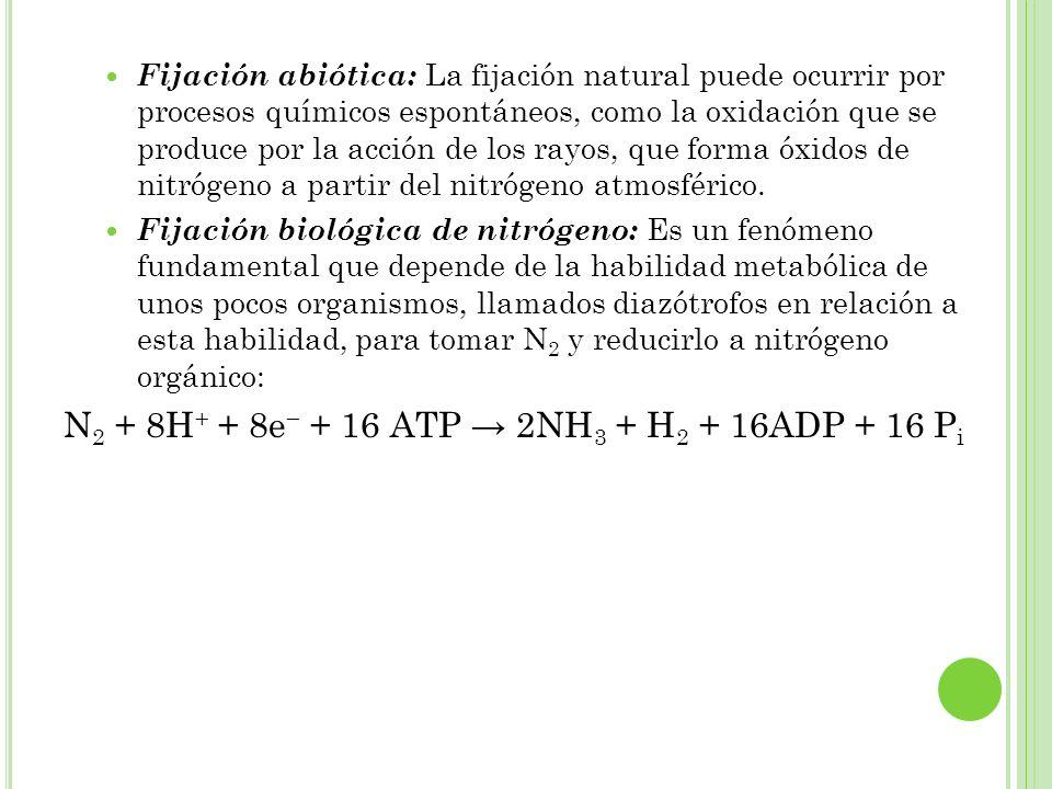 N2 + 8H+ + 8e− + 16 ATP → 2NH3 + H2 + 16ADP + 16 Pi