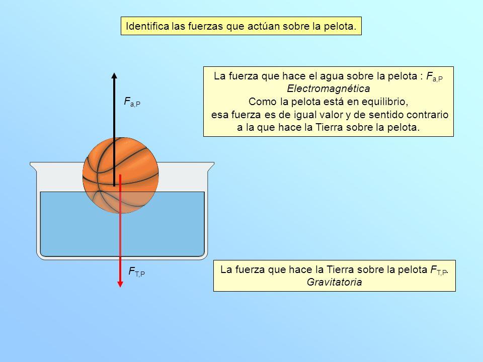 Identifica las fuerzas que actúan sobre la pelota.