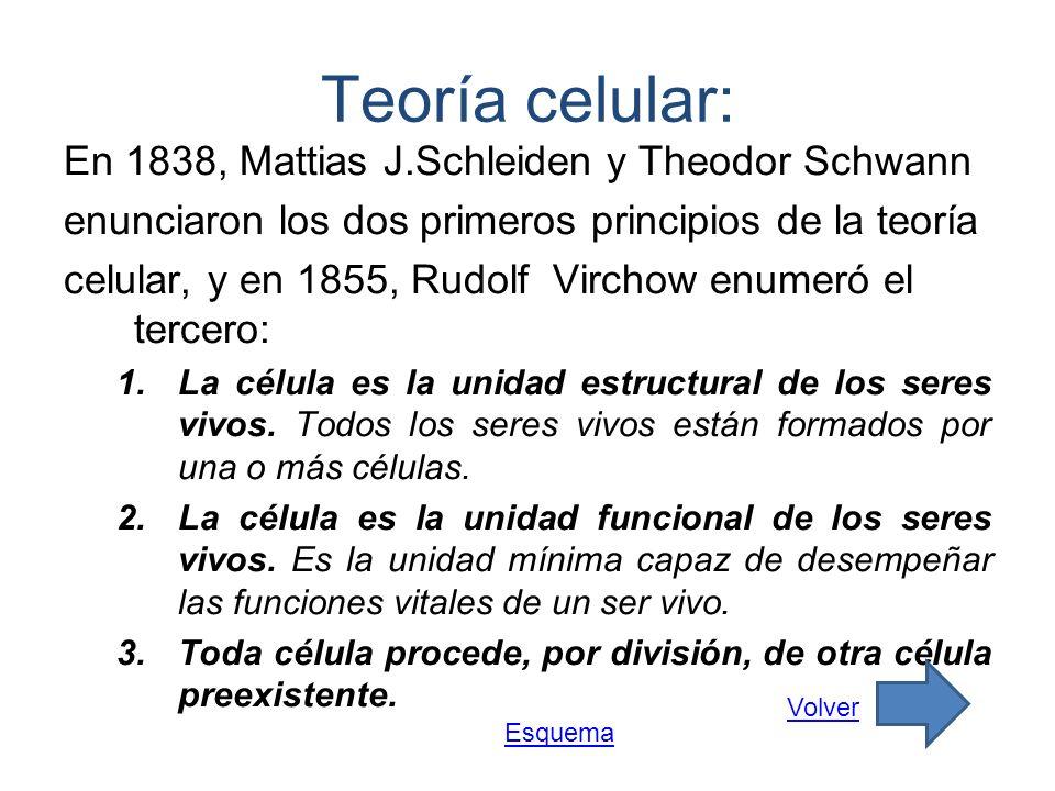 Teoría celular: En 1838, Mattias J.Schleiden y Theodor Schwann