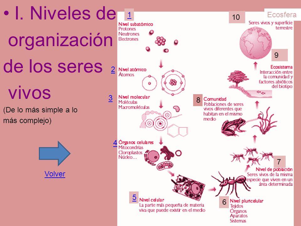I. Niveles de organización de los seres vivos (De lo más simple a lo