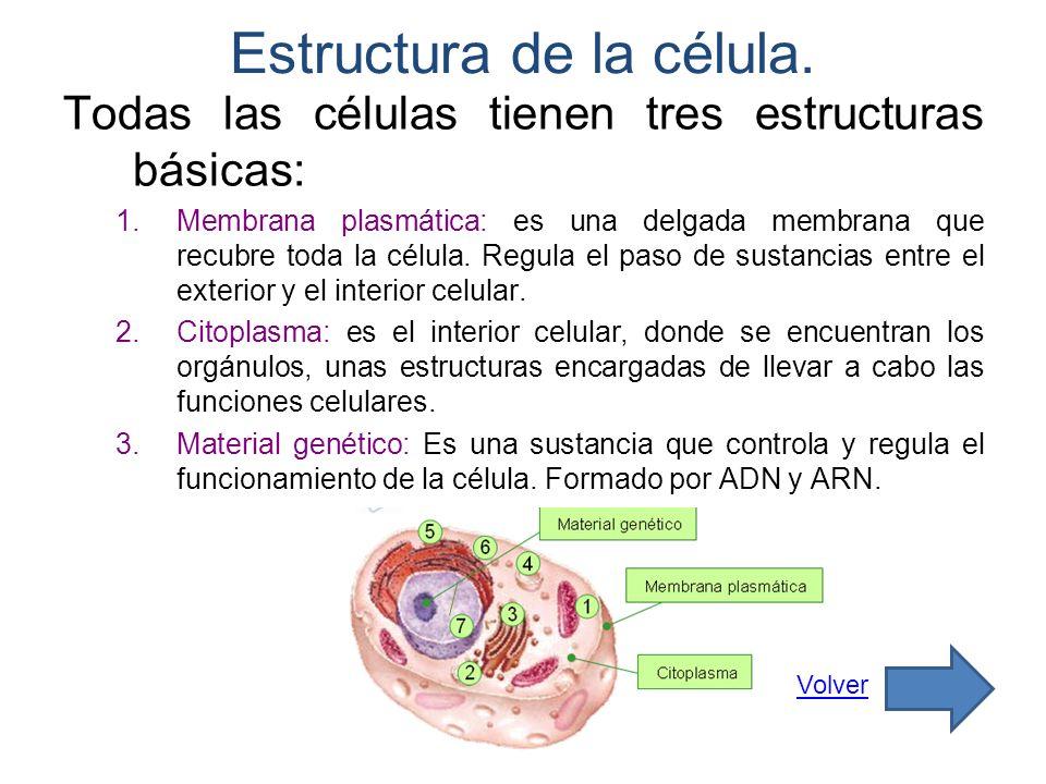 Estructura de la célula.