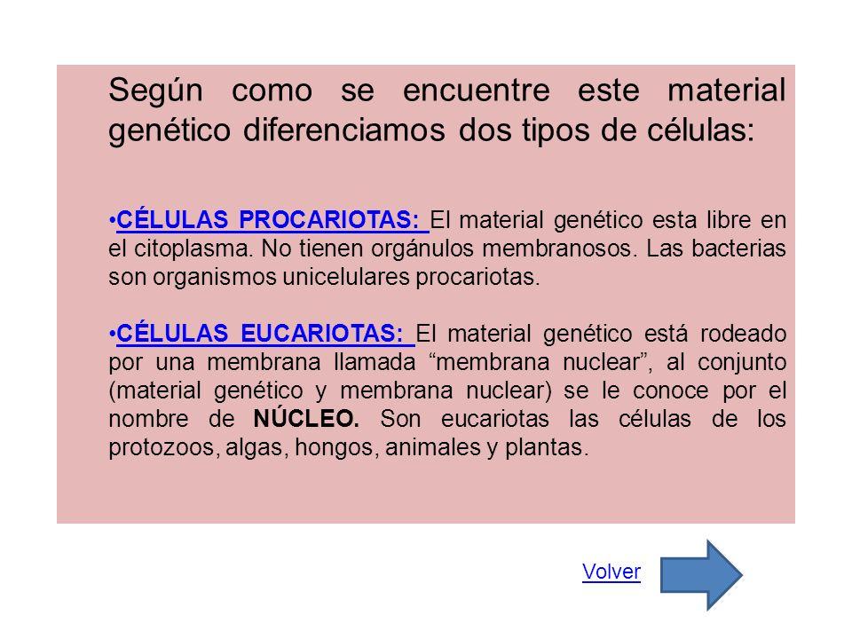 Según como se encuentre este material genético diferenciamos dos tipos de células: