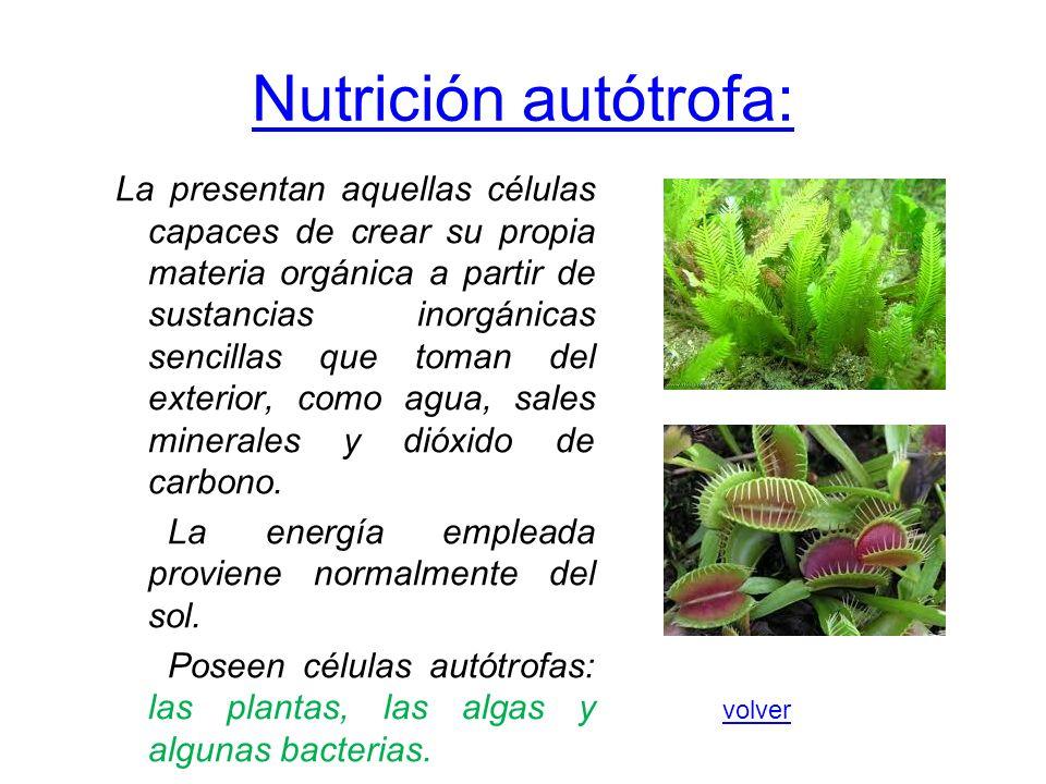 Nutrición autótrofa: