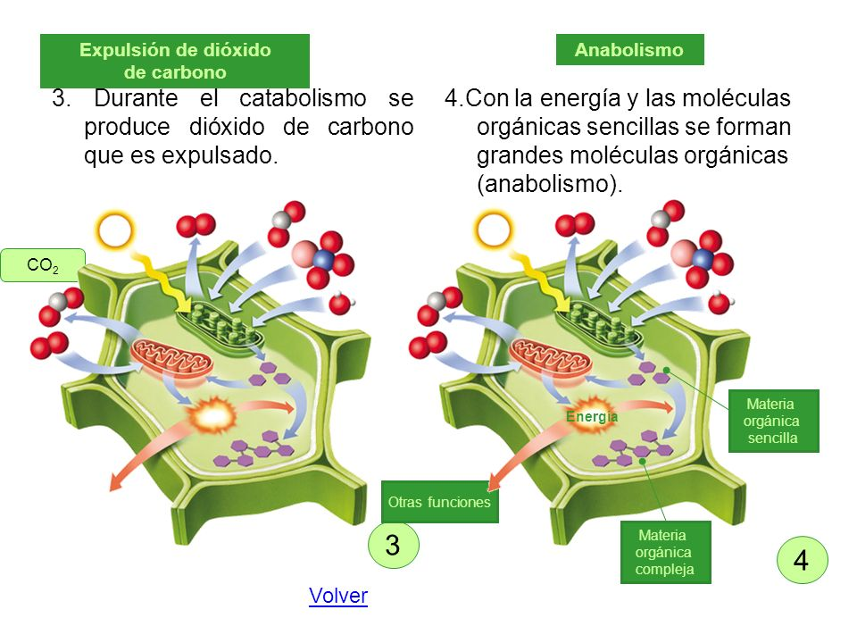 Expulsión de dióxido de carbono