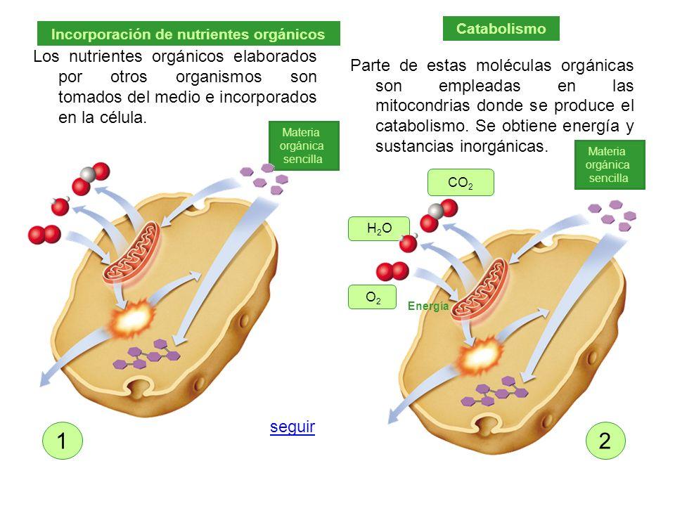 Incorporación de nutrientes orgánicos