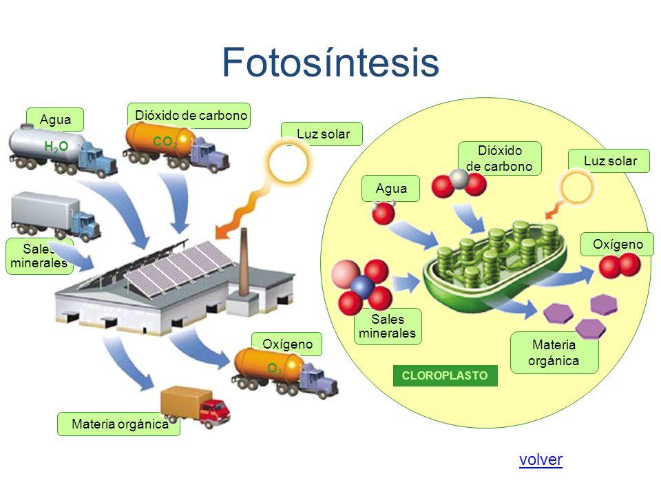 Fotosíntesis volver Dióxido de carbono Agua Luz solar CO2 H2O