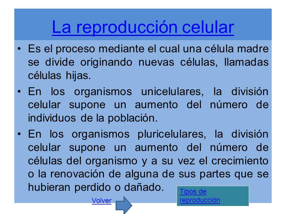 La reproducción celular