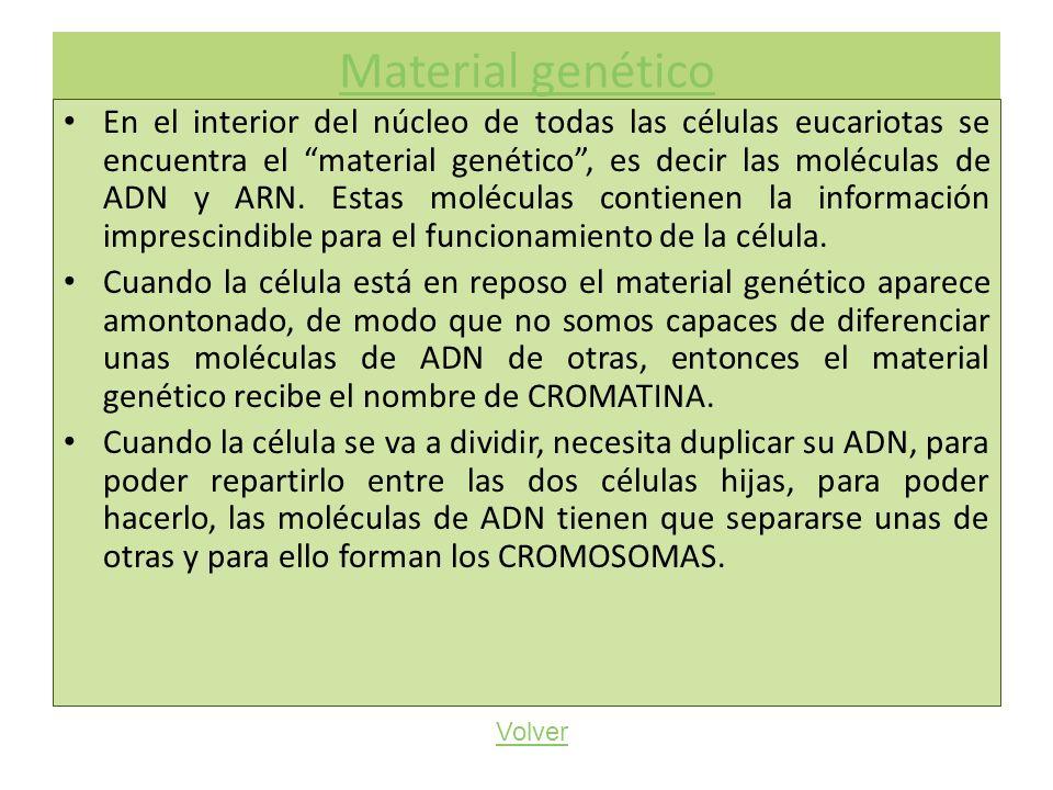 Material genético