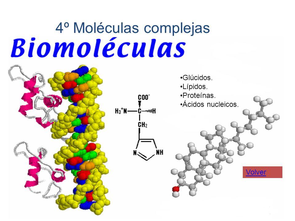 4º Moléculas complejas Glúcidos. Lípidos. Proteínas. Ácidos nucleicos.