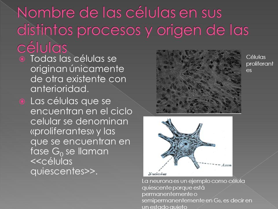 Nombre de las células en sus distintos procesos y origen de las células