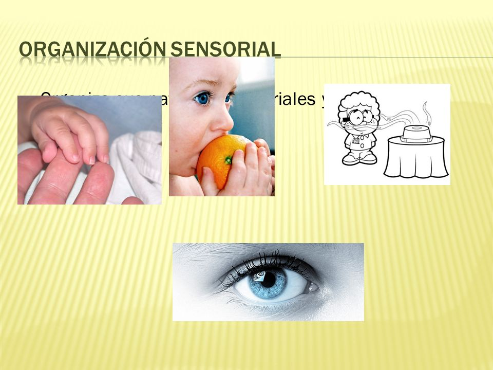 Organización sensorial