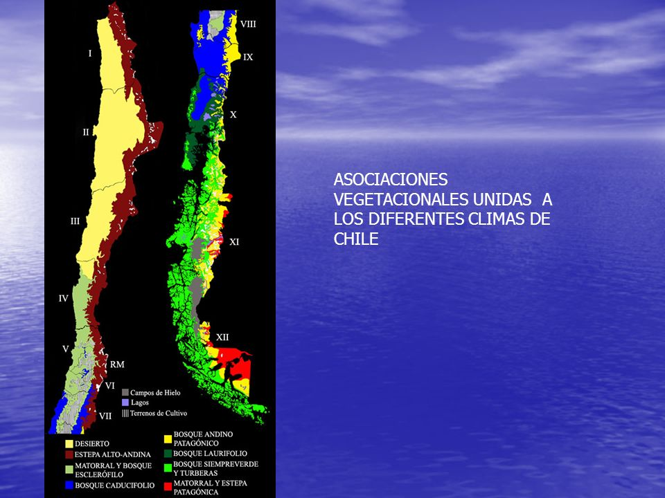 ASOCIACIONES VEGETACIONALES UNIDAS A LOS DIFERENTES CLIMAS DE CHILE