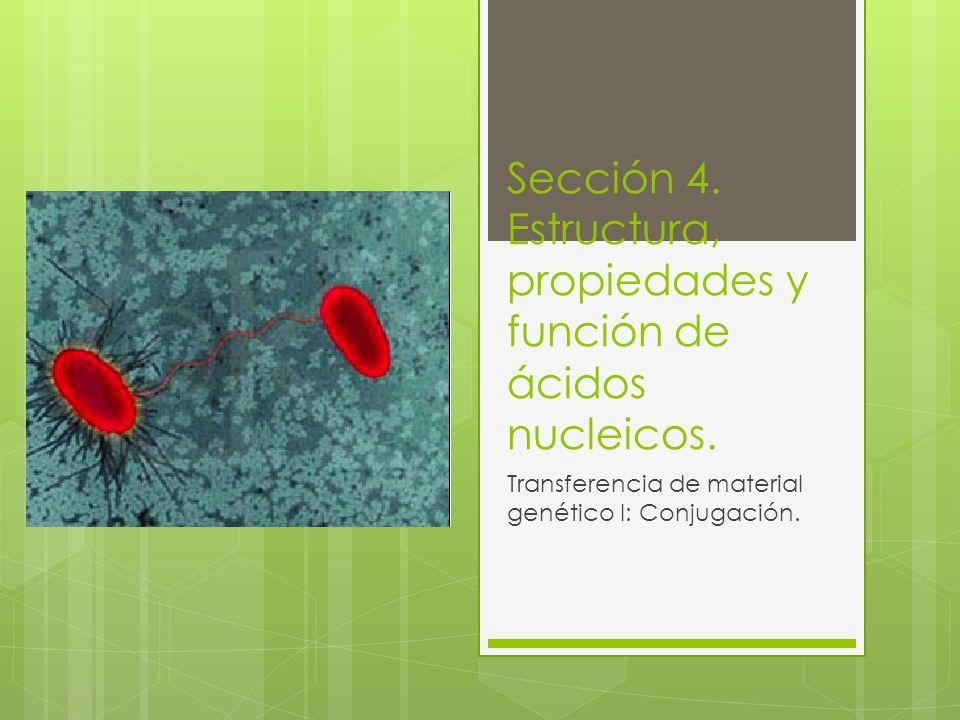 Sección 4. Estructura, propiedades y función de ácidos nucleicos.