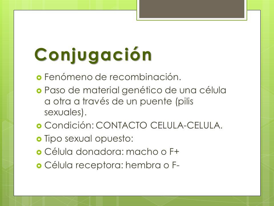 Conjugación Fenómeno de recombinación.