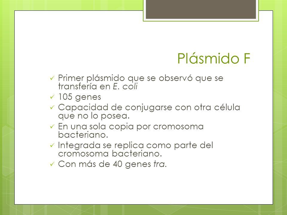 Plásmido F Primer plásmido que se observó que se transfería en E. coli