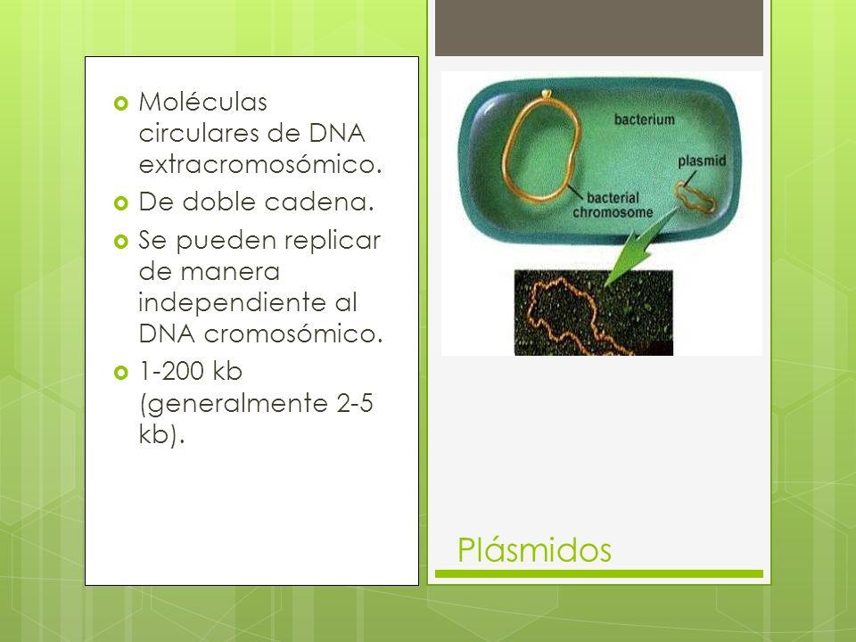 Plásmidos Moléculas circulares de DNA extracromosómico.