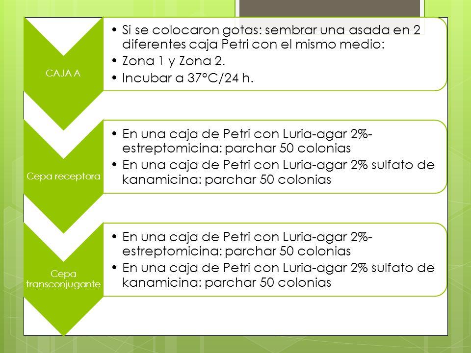 CAJA A Si se colocaron gotas: sembrar una asada en 2 diferentes caja Petri con el mismo medio: Zona 1 y Zona 2.