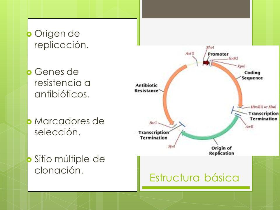 Estructura básica Origen de replicación.