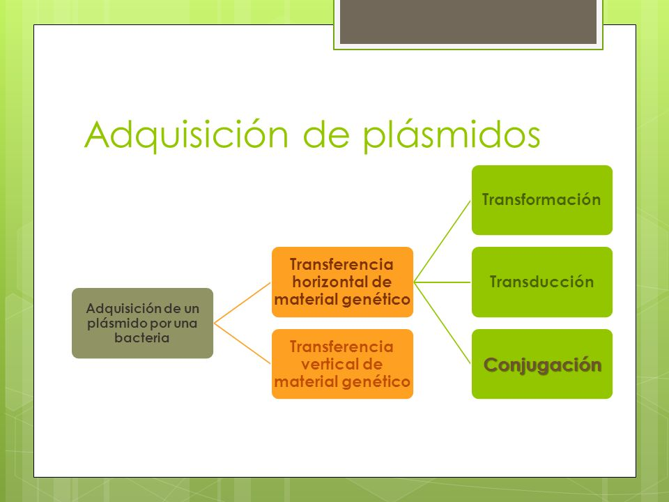 Adquisición de plásmidos