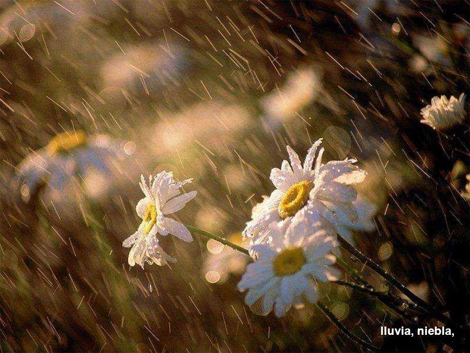 lluvia, niebla,