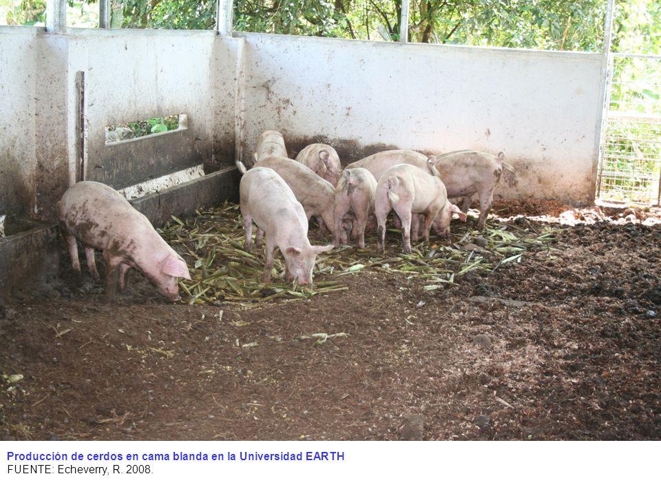 Producción de cerdos en cama blanda en la Universidad EARTH