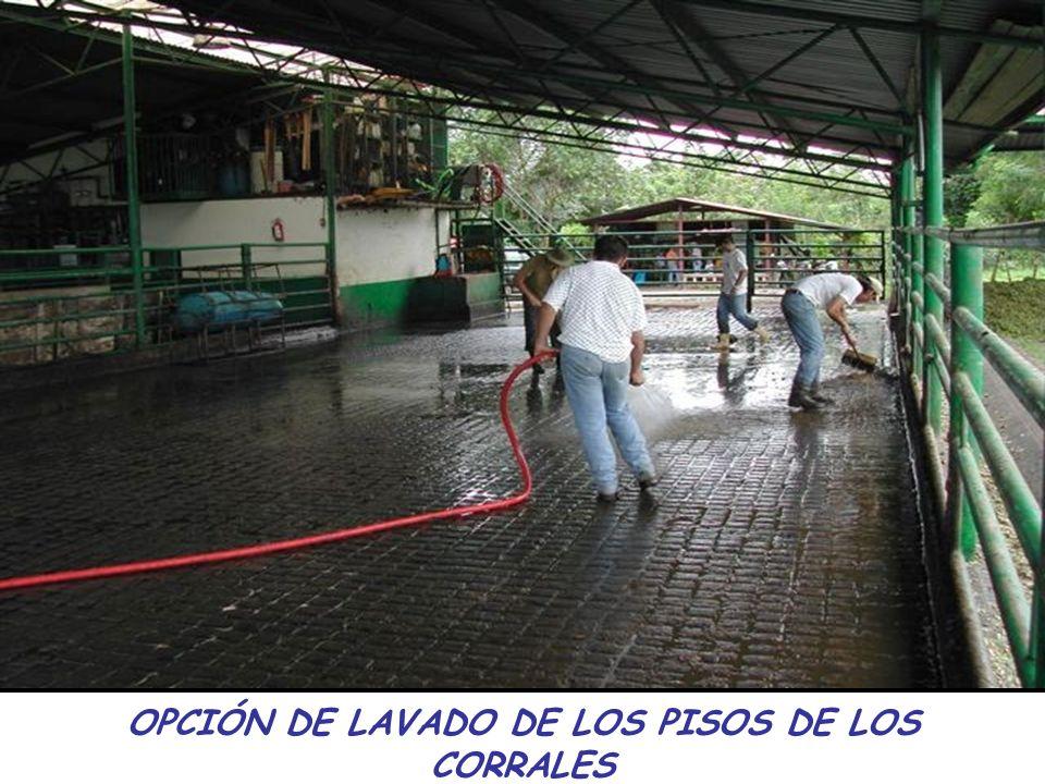 OPCIÓN DE LAVADO DE LOS PISOS DE LOS CORRALES