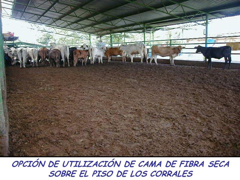 OPCIÓN DE UTILIZACIÓN DE CAMA DE FIBRA SECA SOBRE EL PISO DE LOS CORRALES