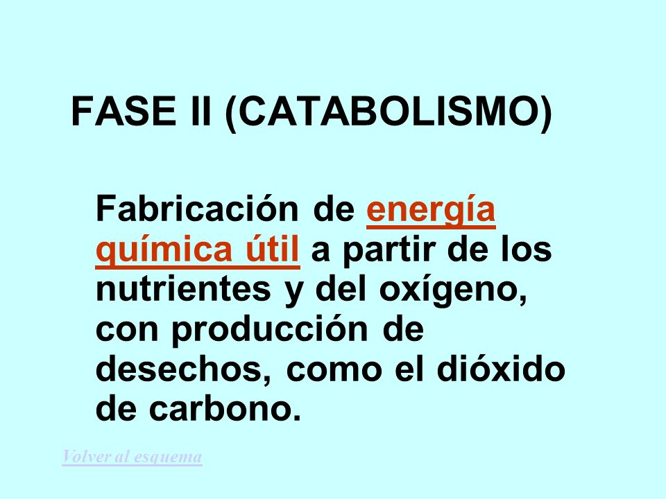 FASE II (CATABOLISMO)