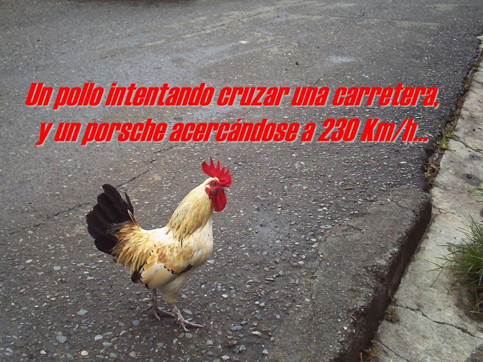 Un pollo intentando cruzar una carretera, y un porsche acercándose a 230 Km/h...
