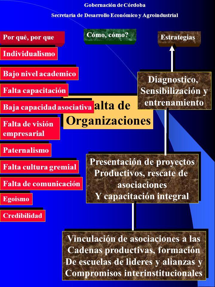 Falta de Organizaciones
