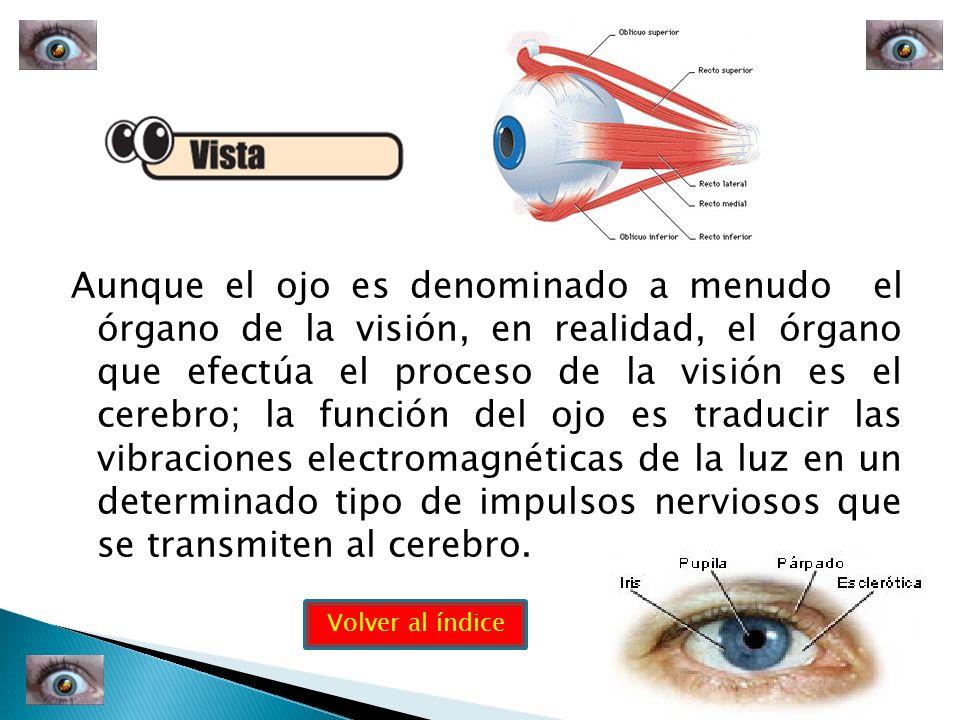 Aunque el ojo es denominado a menudo el órgano de la visión, en realidad, el órgano que efectúa el proceso de la visión es el cerebro; la función del ojo es traducir las vibraciones electromagnéticas de la luz en un determinado tipo de impulsos nerviosos que se transmiten al cerebro.
