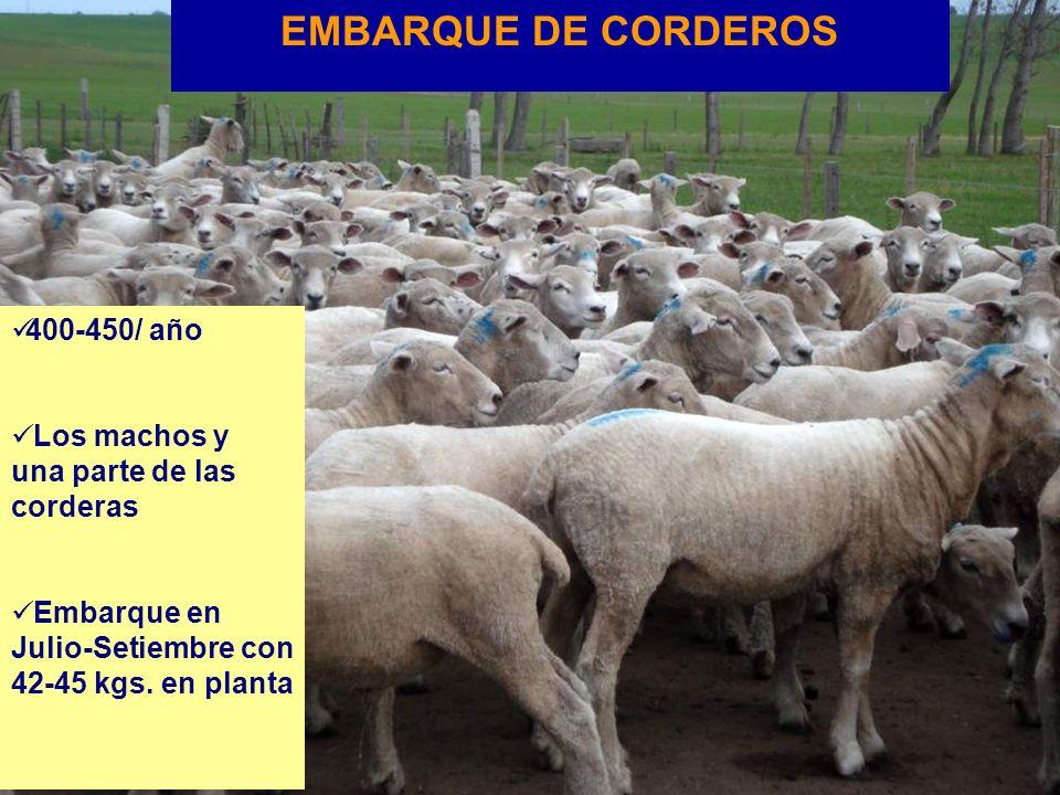 EMBARQUE DE CORDEROS 400-450/ año