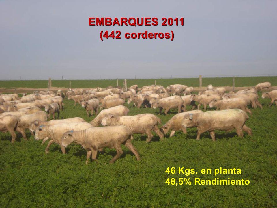EMBARQUES 2011 (442 corderos) 46 Kgs. en planta 48,5% Rendimiento