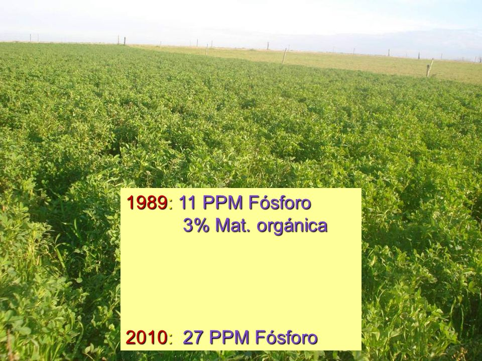 1989: 11 PPM Fósforo 3% Mat. orgánica 2010: 27 PPM Fósforo