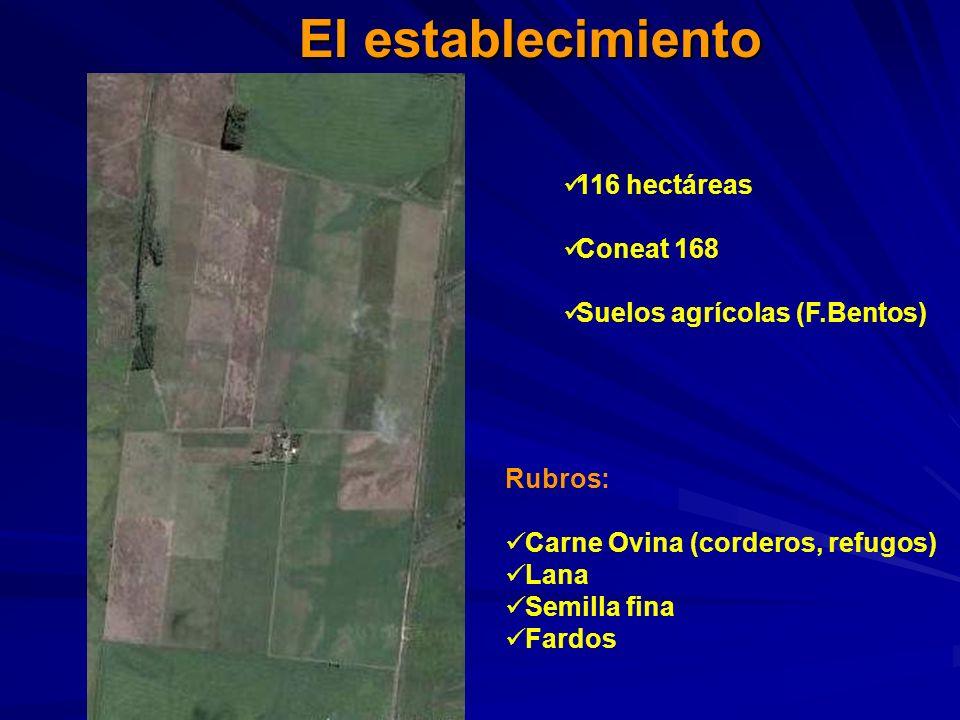 El establecimiento 116 hectáreas Coneat 168