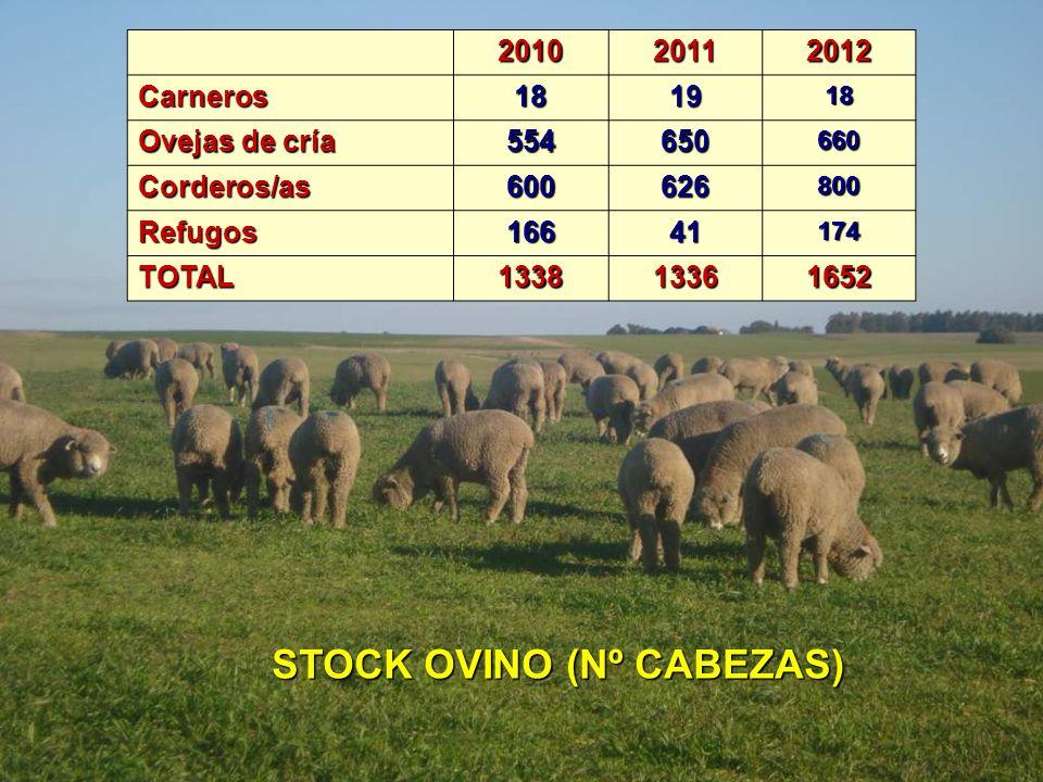 STOCK OVINO (Nº CABEZAS)