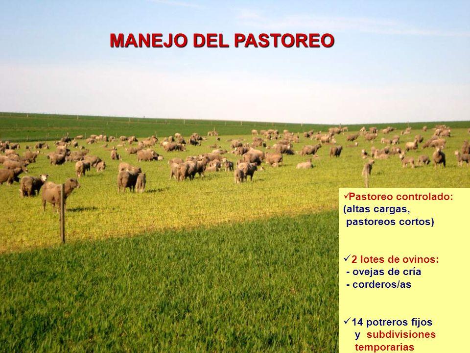 MANEJO DEL PASTOREO Pastoreo controlado: (altas cargas,