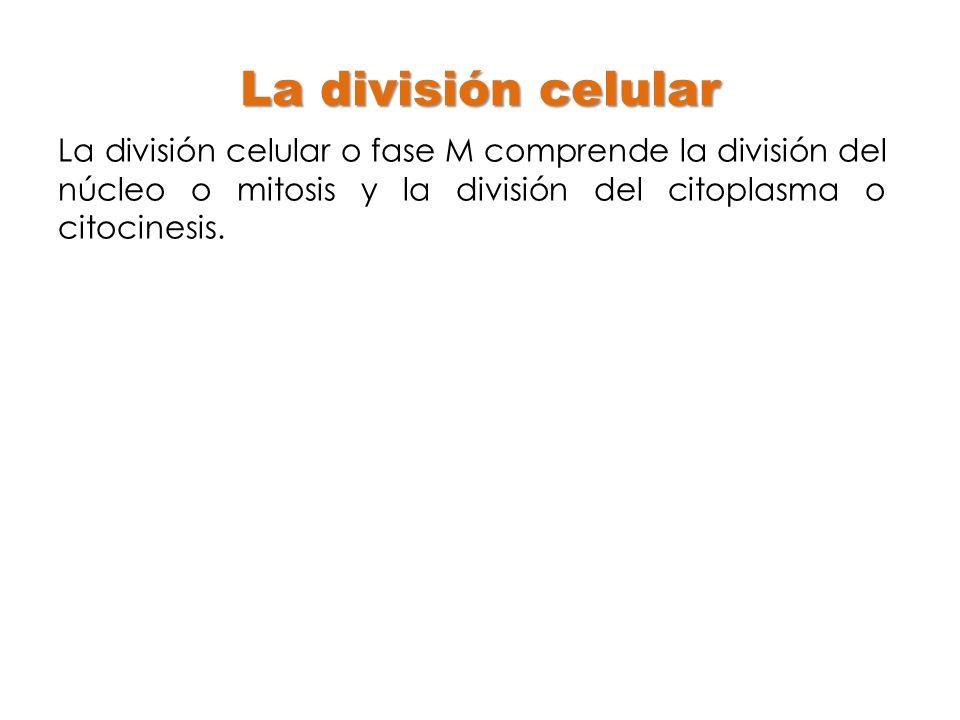 La división celular La división celular o fase M comprende la división del núcleo o mitosis y la división del citoplasma o citocinesis.