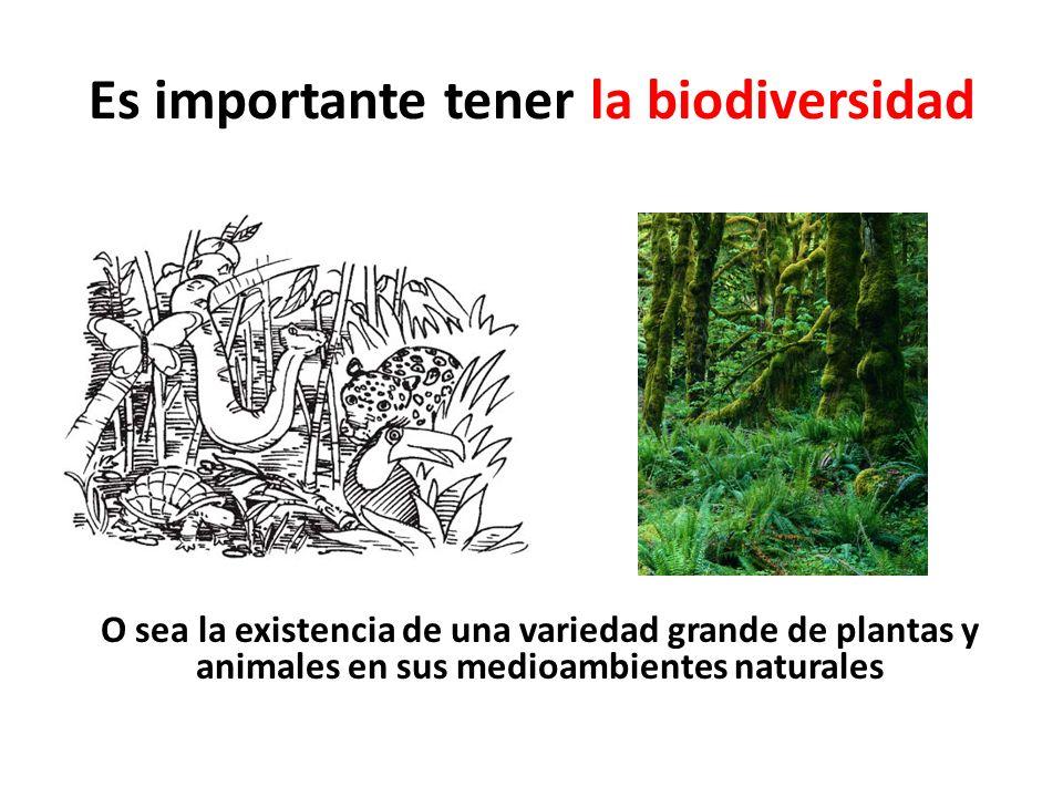 Es importante tener la biodiversidad