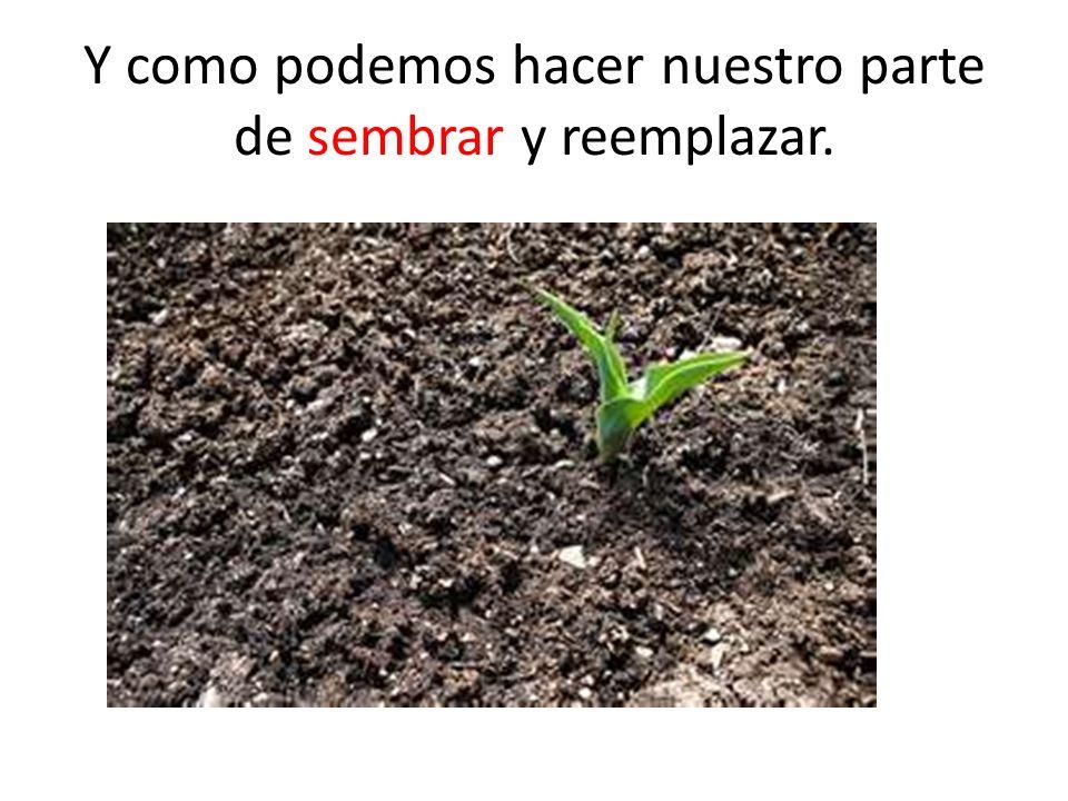 Y como podemos hacer nuestro parte de sembrar y reemplazar.
