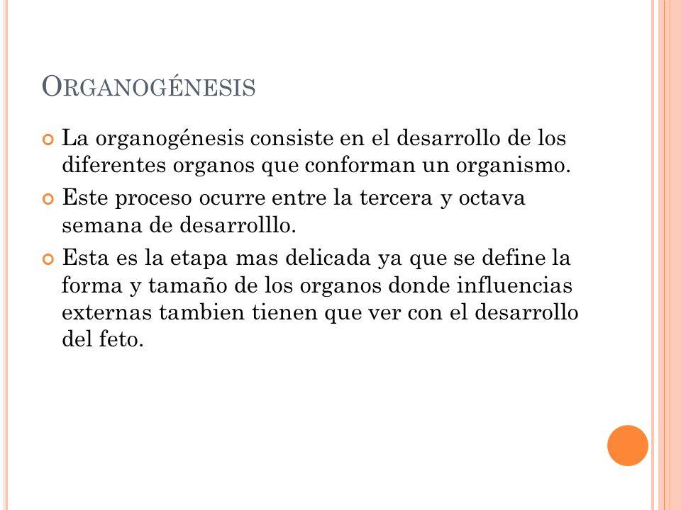 Organogénesis La organogénesis consiste en el desarrollo de los diferentes organos que conforman un organismo.