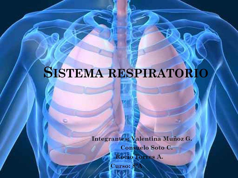 Sistema respiratorio Integrantes: Valentina Muñoz G. Consuelo Soto C.