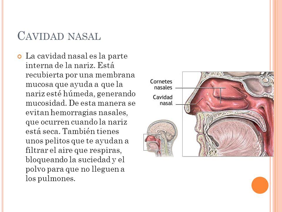 Cavidad nasal