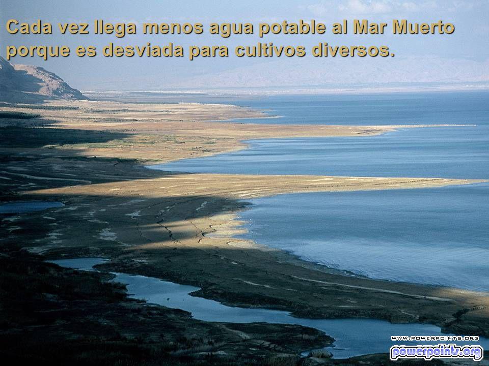Cada vez llega menos agua potable al Mar Muerto porque es desviada para cultivos diversos.