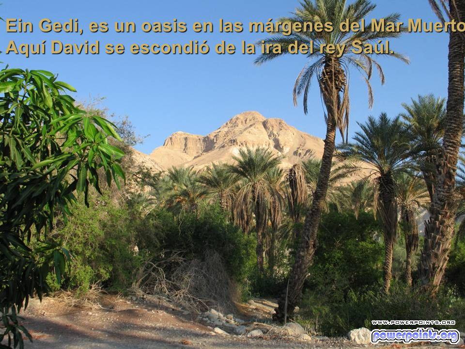 Ein Gedi, es un oasis en las márgenes del Mar Muerto.