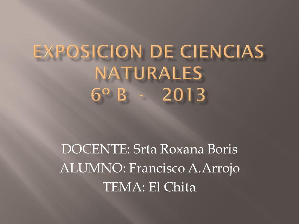 EXPOSICION DE CIENCIAS NATURALES 6º B - 2013