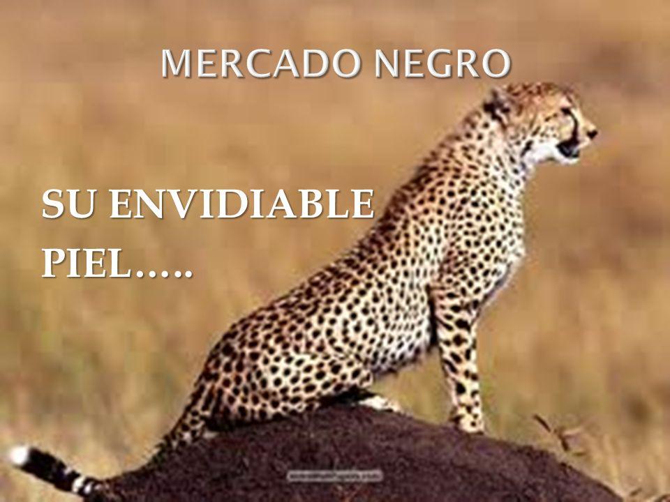 MERCADO NEGRO SU ENVIDIABLE PIEL…..