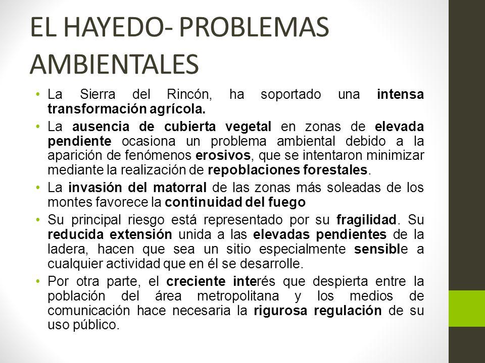 EL HAYEDO- PROBLEMAS AMBIENTALES