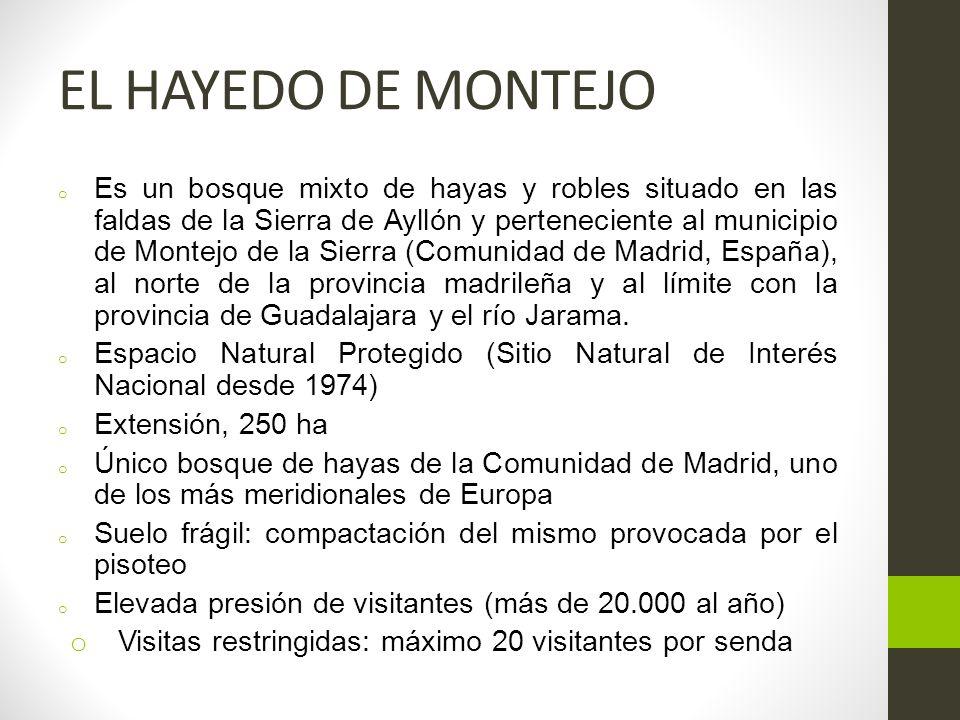 EL HAYEDO DE MONTEJO